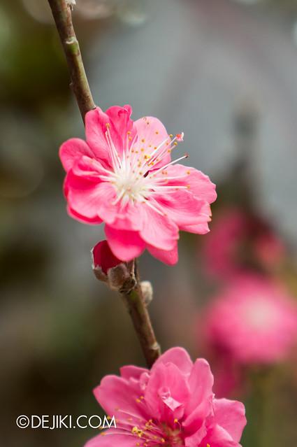 Gardens by the Bay - Cherry Blossom / Sakura