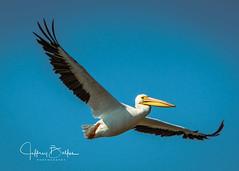 Shoreline Park Birds