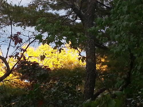 autumn trees pinetree fallfoliage cherrytree richmondme