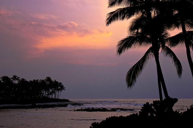 Sunset Palm Villas Condo Association Tax Id