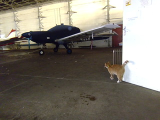 Hangar Cat Patrol