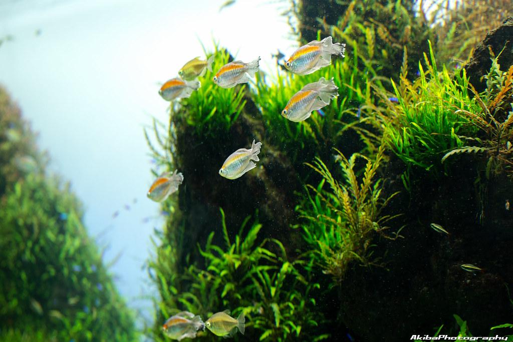 sumida-aquarium#6
