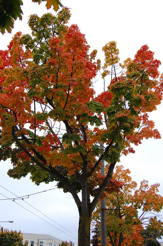 Fall Colors, Ballard
