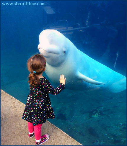 "I only know the song Baby Beluga from an old episode of Full House.  ""You got it, dude!"""