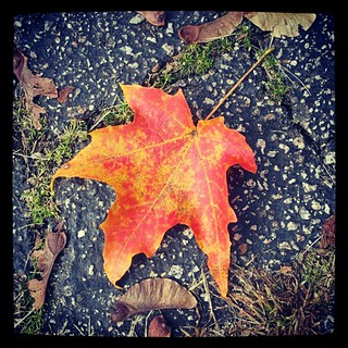 My favorite time of year! #fall #foliage #leaf #newhampshire #driveway #leaves #red #orange #love #happy #inspiration #photooftheday #picoftheday