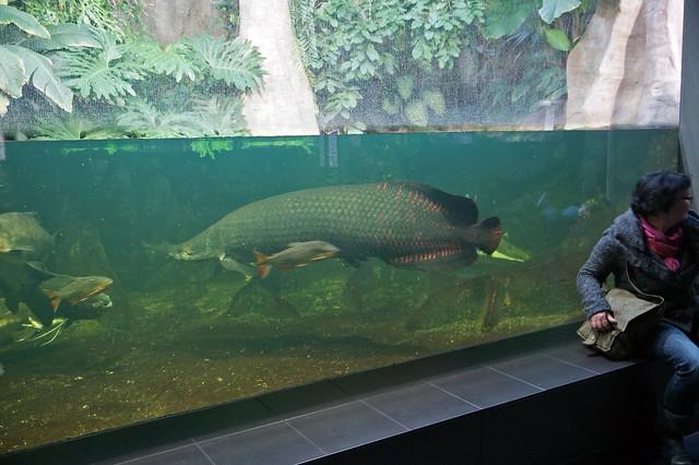 2012 10 10 10 13 berlin 013 zoologischer garten zoo aquar flickr photo sharing. Black Bedroom Furniture Sets. Home Design Ideas