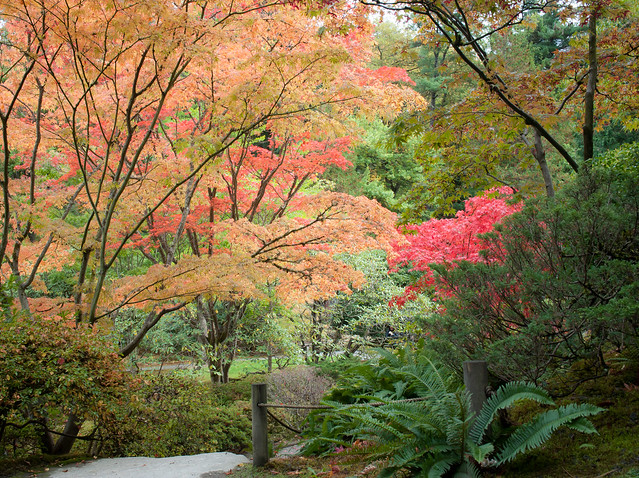 Japanese garden fall colors 6 flickr photo sharing for Japanese garden colors
