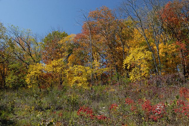 Shaw Nature Reserve (the Arboretum), in Gray Summit, Missouri, USA - autumn colors in glade