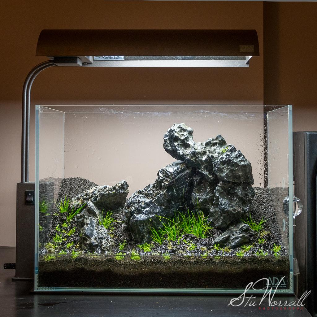Stus ADA Mini m - Seiryu Stone AquaScaping World Forum