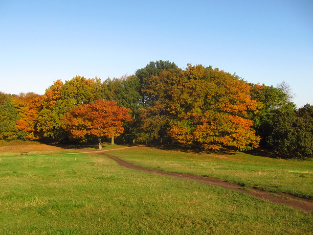 Parliament Hill Trees