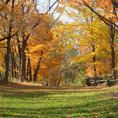 #nofilter #fall #nature Jockey Hollow up near Morristown