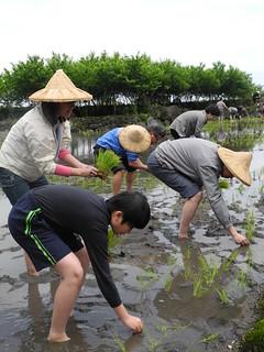 親自到農地參與體驗生產,是各國用來保護自己農業的方式。(圖片來源:合樸農學市集)