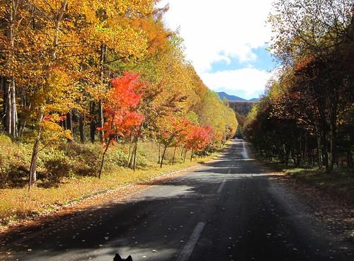 横谷観音展望台への道 2012年10月29日10:27 by Poran111