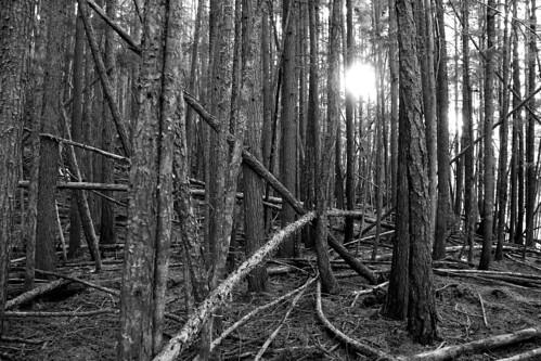 blackandwhite forest hiking britishcolumbia kootenays riverwalk kaslo