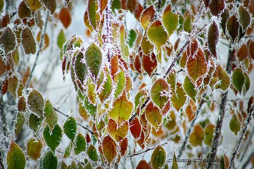 Frosty by Nancy Hawkins