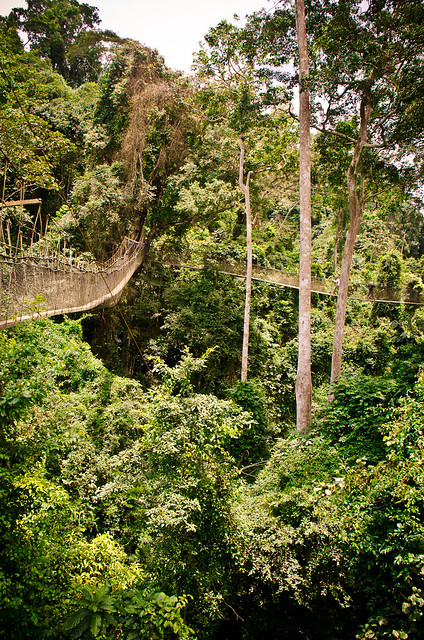 the hanging bridges of Kakum