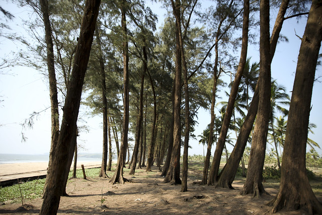 Kerim Beach, with its pines