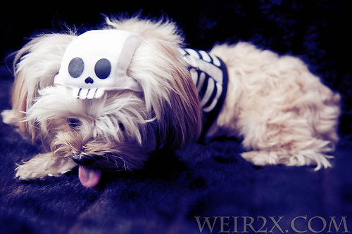 Fluffy Skeleton Out-take