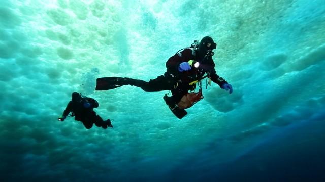 Under the Sea Ice