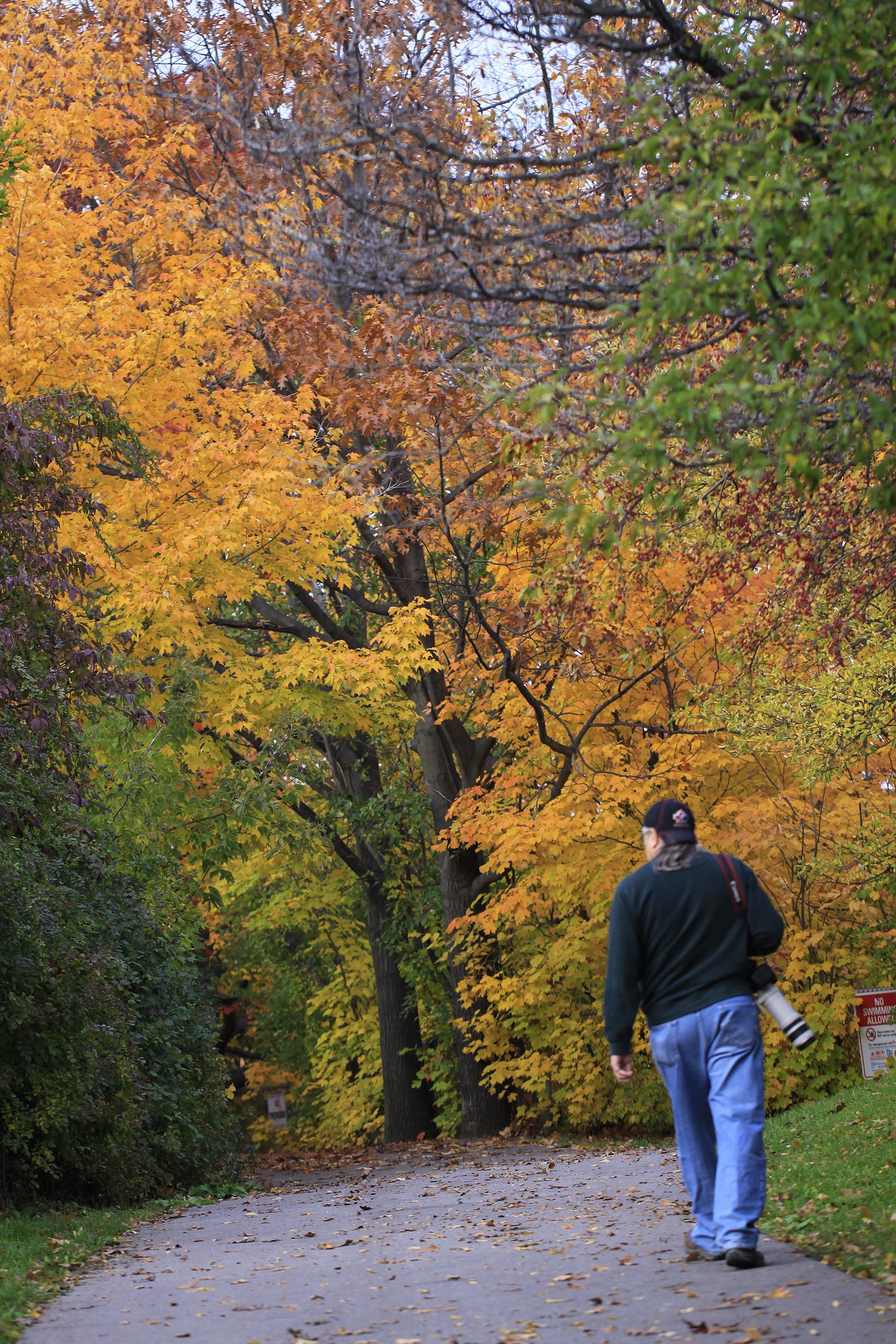 wabukayne autumn Frank