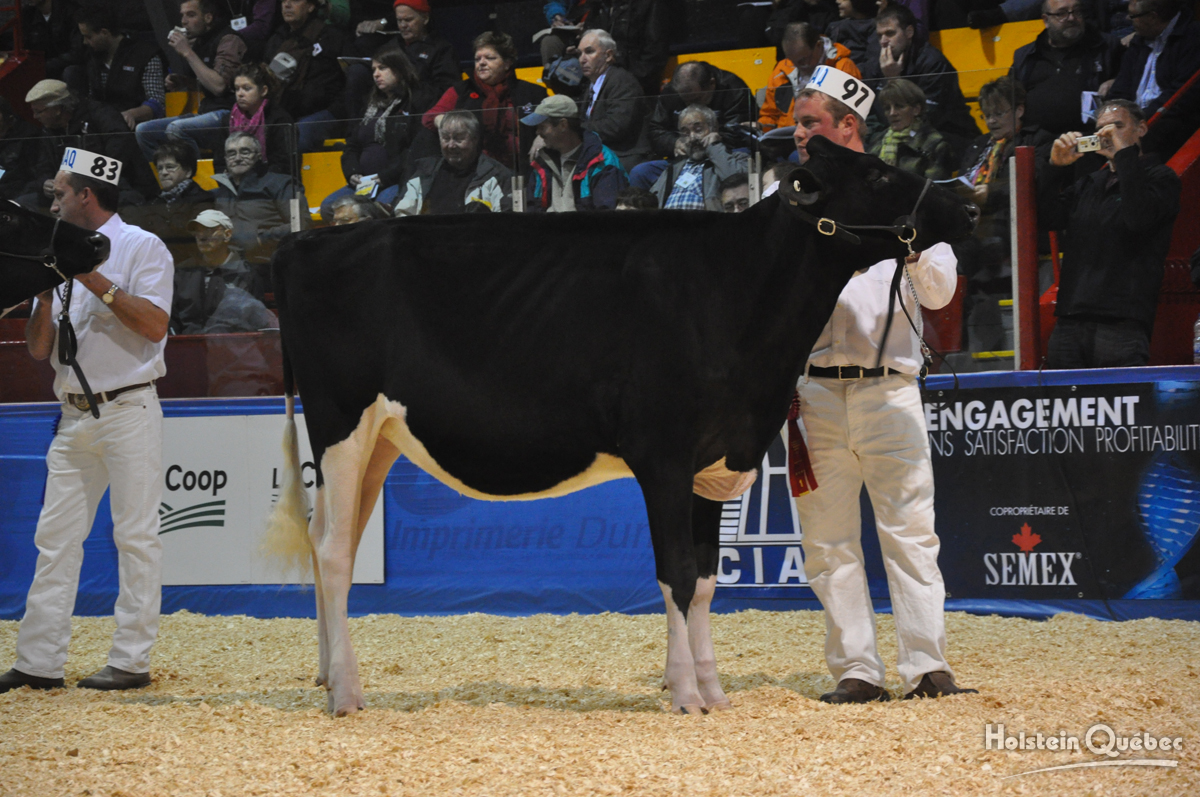 Junior Champion: Jacobs Jordan Babe (Gillette Jordan x Jacobs Laurin Belga), Ferme Jacobs Inc.