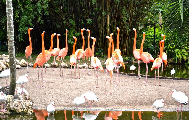 Wildlife animal sanctuary flamingo gardens in south florida for Flamingo gardens fort lauderdale