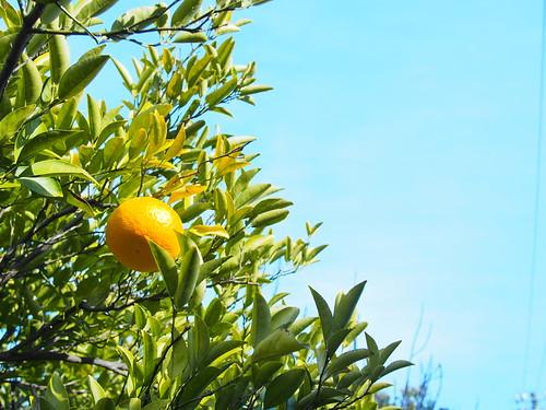 130112_fruit