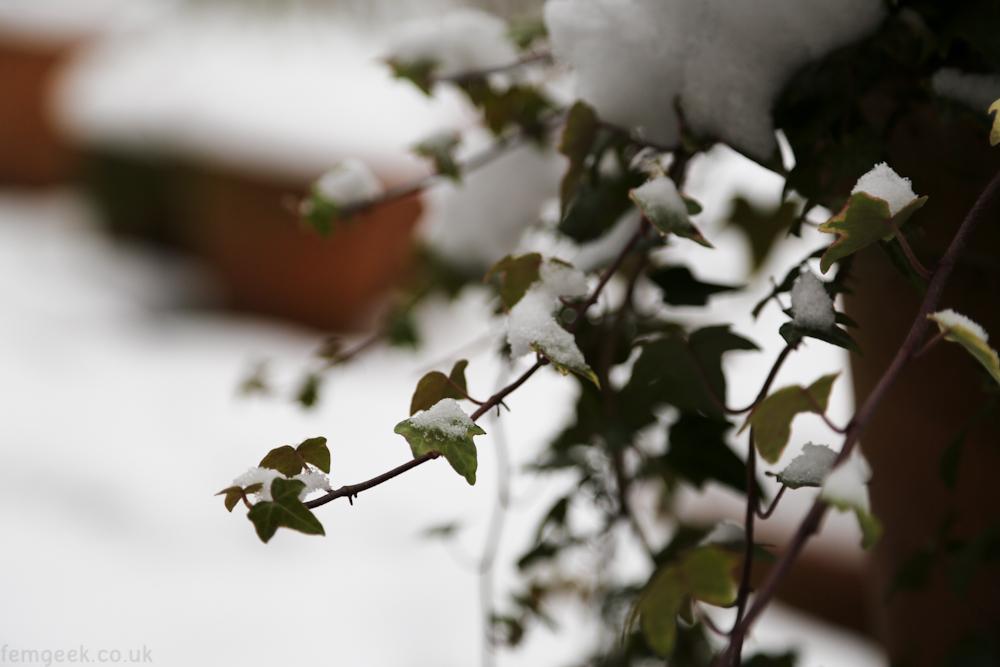 Snow Post 2013