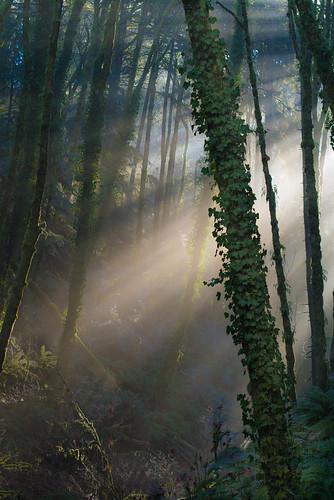 winter fog oregon forest portland forestpark germantownroad