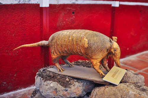 Museo del Valle de Tehuacán (32)