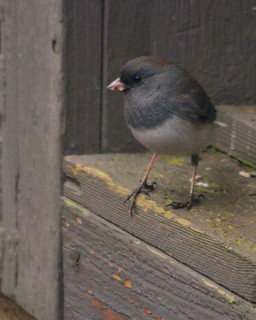 More birds at my feeding stations