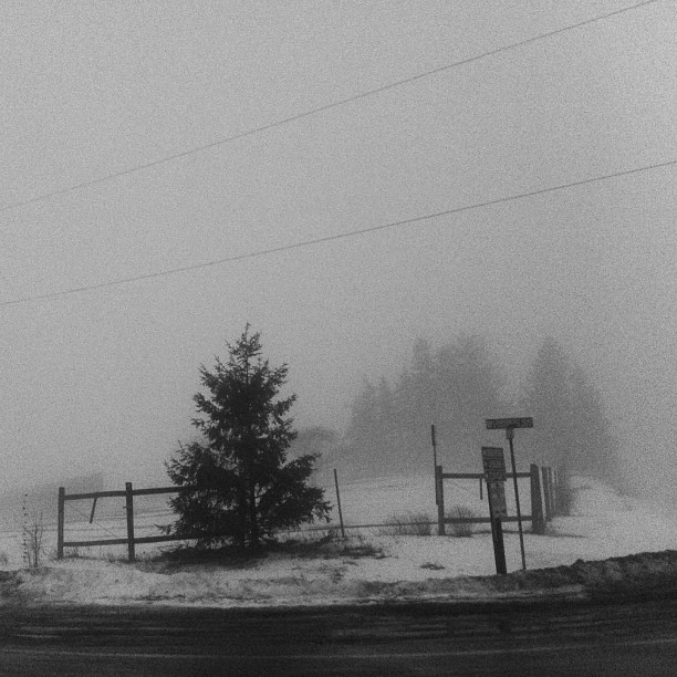 More crazy fog today! Can barely see in front of the van. #5shotchallenge #blackandwhite