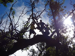 Chris Bates, Landon Heavener, and David Yoder in a tree along the hike