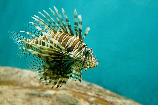 Texas State Aquarium-015.jpg