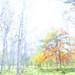 光溢れ by Hitoshi char♪