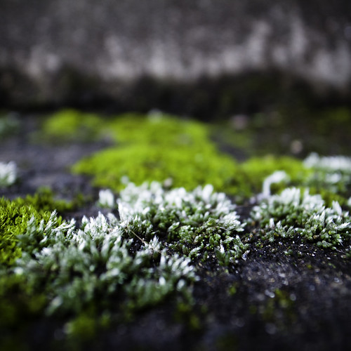 Time Stationscape Moss 01