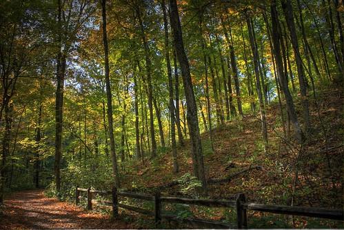 autumn trees ohio fall leaves sunshine fence path cincinnati hill fallenleaves sharonwoods