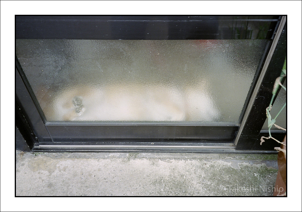 扉の向こうに寝犬 / Behind The Door, A Dog Is Sleeping