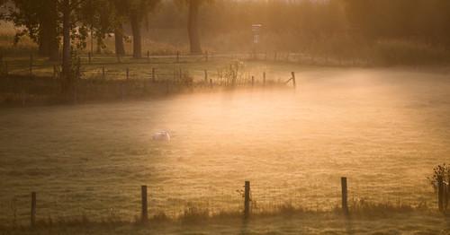 morning oktober mist fog sunrise haze nevel october goldenhour ochtend 2012 schapen naturephotography empel zonsopkomst natuurfotografie supershot scheep bej abigfave impressedbeauty coth5 blinkagain