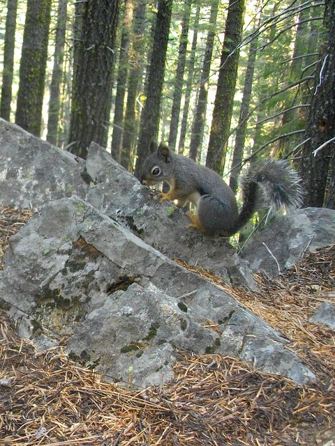 doug squirrel
