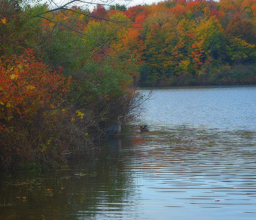 Bird in lake in the fall