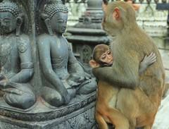 Nepal Journalism and Photography Internship in Kathmandu by Rebecca Walters 2012