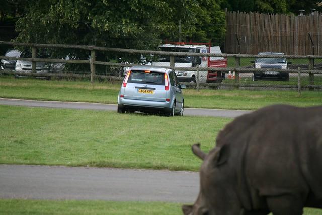 Car Safari Near Me