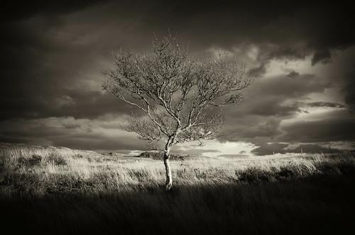 trees blackandwhite tree landscape iceland finepix fujifilm x100