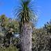 Palm trunks - troncos de palmas en área de palmas entre Las Palmas y La Paz, Región Mixteca, Oaxaca, Mexico por Lon&Queta