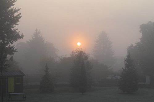 Foggy morning / Matin brumeux.