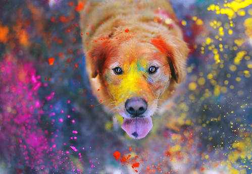 The Explosion of Colors  42/52 by sprinkle happiness