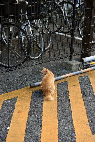 Mimicry of a stray cat
