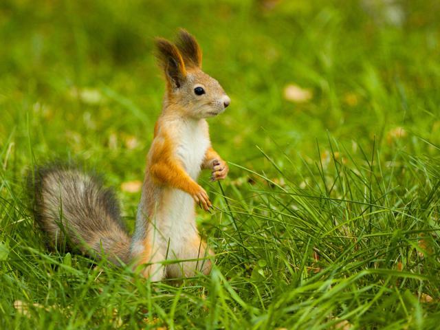 Squirral by Almas Galimov, Ufa, Russia