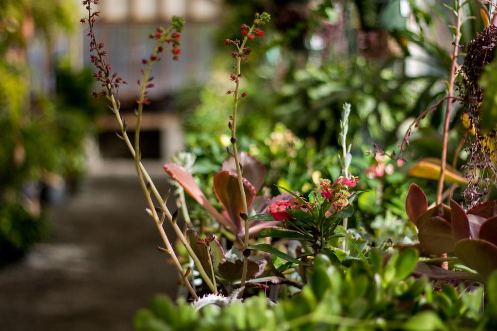 Greenhouse Aisle